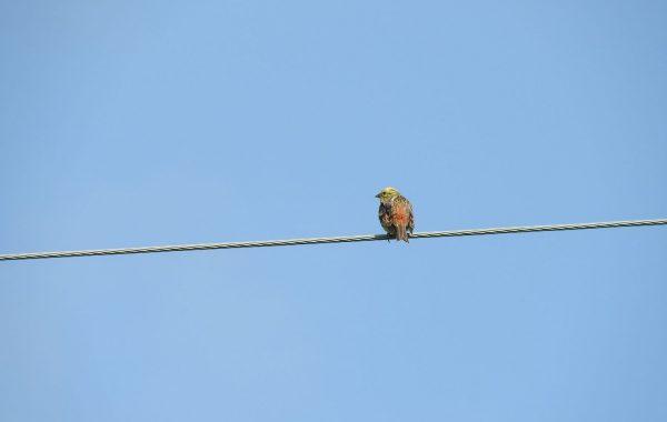 Poznajemy ptaki wodno-błotne Warmii i Mazur