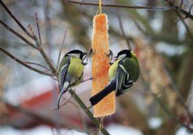 """Podsumowanie konkursu fotograficznego """"Skrzydlaci goście w moim zimowym ogrodzie"""""""