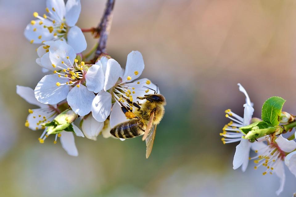 """Spotkania on-line z przyrodą """"Ogród dla pszczół (i nie tylko)"""""""
