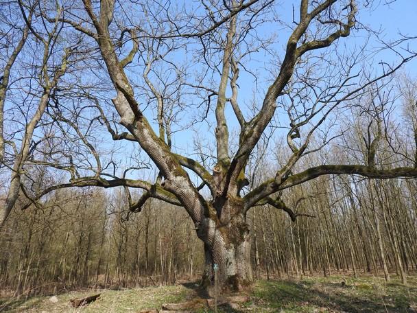 Spotkania on-line z przyrodą: Park Krajobrazowy Pojezierza Iławskiego