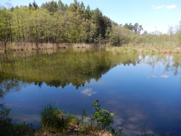 """Warsztaty terenowe """"Parki krajobrazowe w edukacji biologicznej i geograficznej. Poznajemy dziedzictwo przyrodnicze i kulturowe Parku Krajobrazowego Pojezierza Iławskiego"""""""