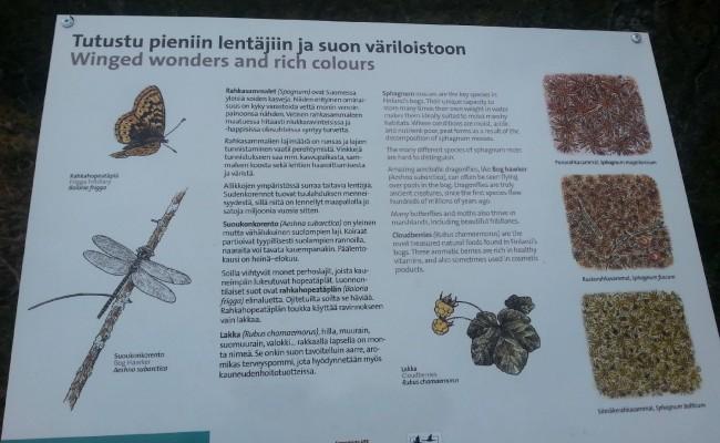 finlandia_13